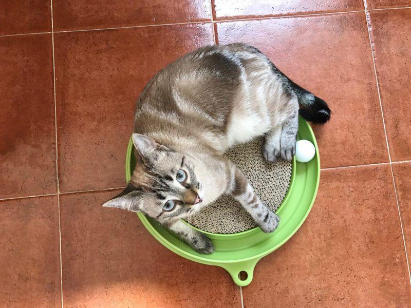 Zabawki na inteligencję dla kota