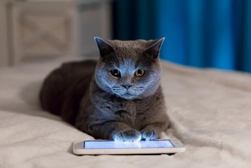 Aplikacje dla kotów