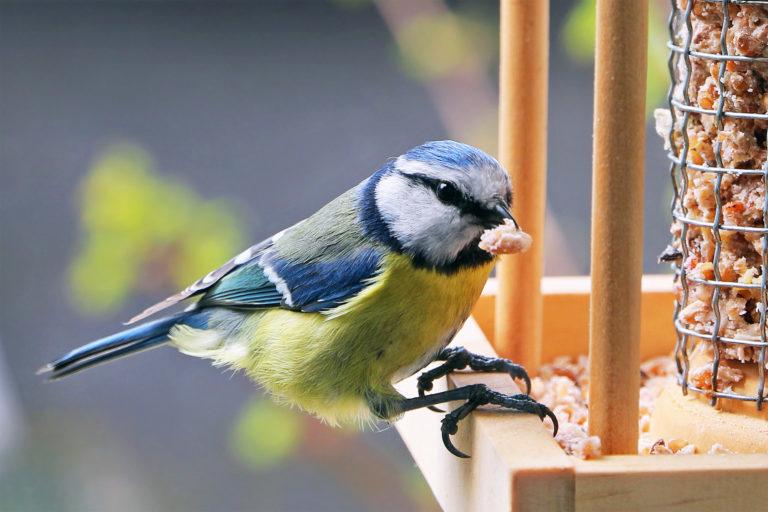 karmienie dzikich ptaków