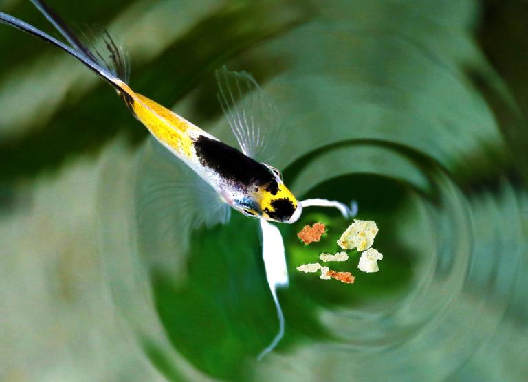 pokarm dla rybek