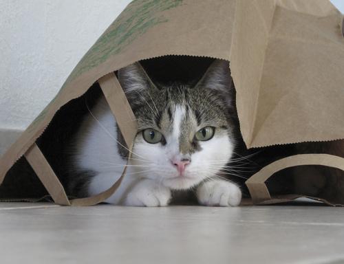 Zabawka w chowanego z kotem