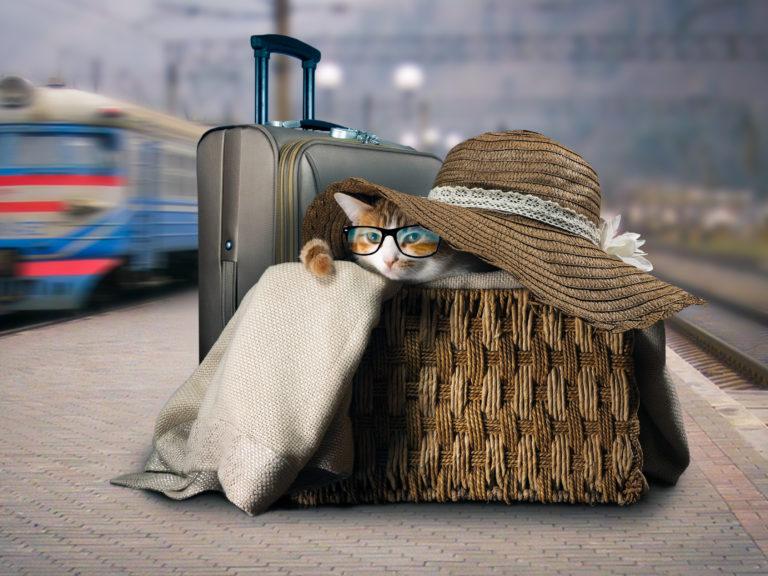 Kot w koszu wiklinowym