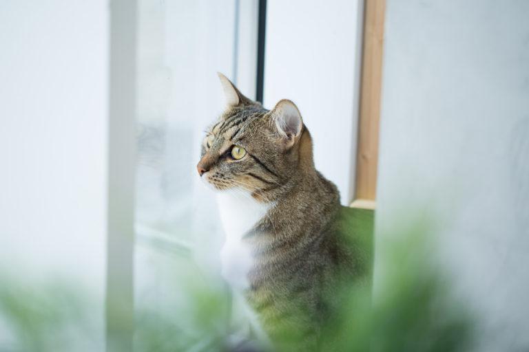 Zapach kocimiętki a kot