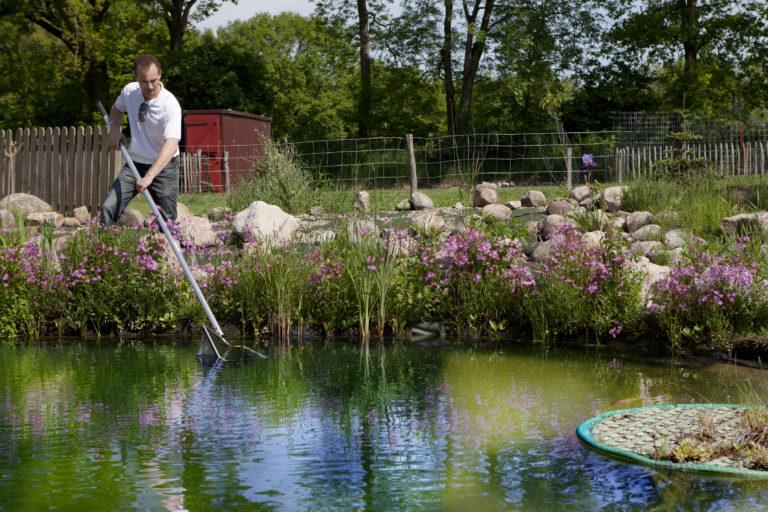 Staw ogrodowy z rybami