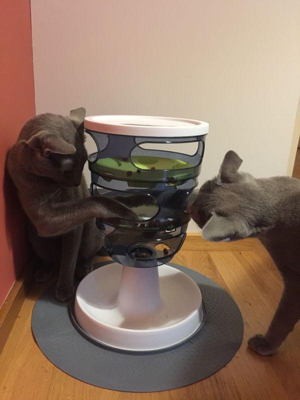 Zabawka interaktywna dla kotów