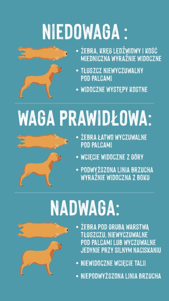 Skąd wiedzieć, że pies ma nadwagę