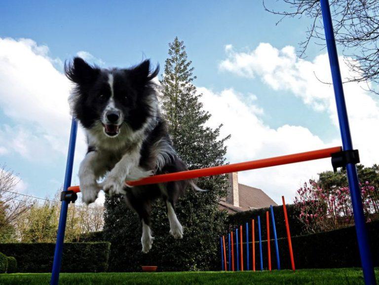 Ruch, sport, zabawa psa