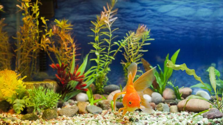 Choroby rybek akwariowych