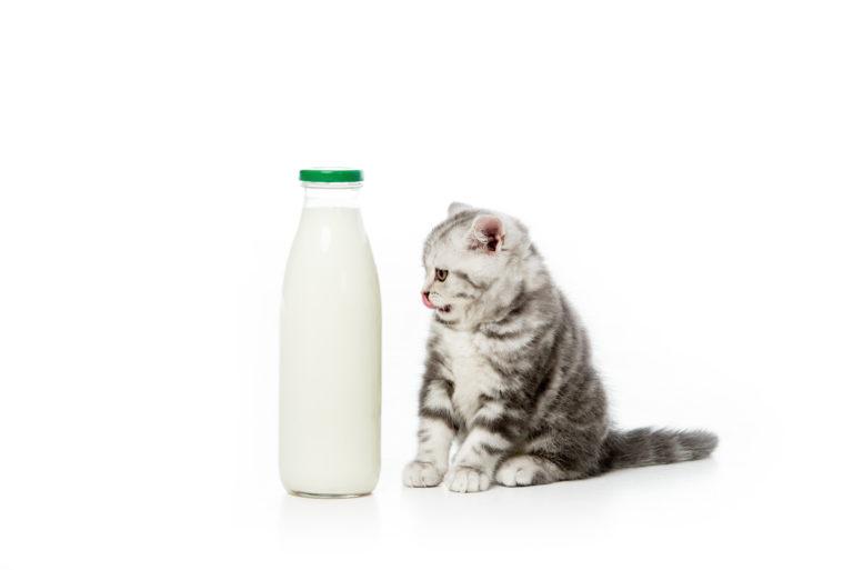 specjalne mleko dla kota
