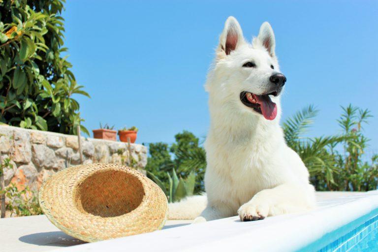 Ochrona psa przed słońcem