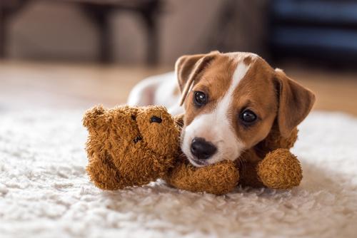 Zabawka dla szczeniaka