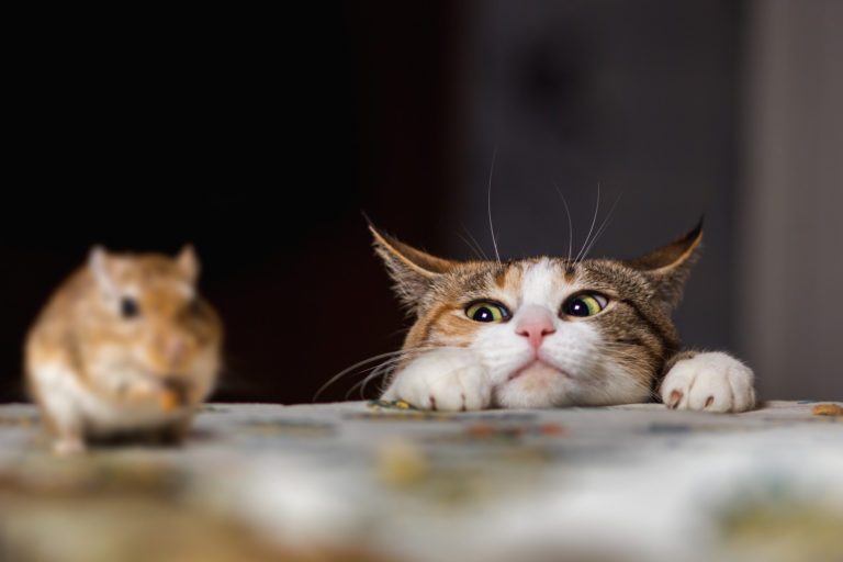 Polowanie kota na myszkę