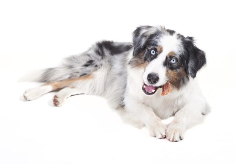 Nagródki dla psów