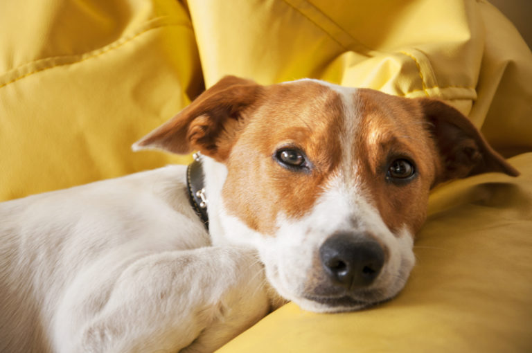 Psychologia dla psa