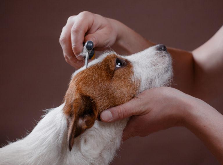 Pielęgnacja sierści psa