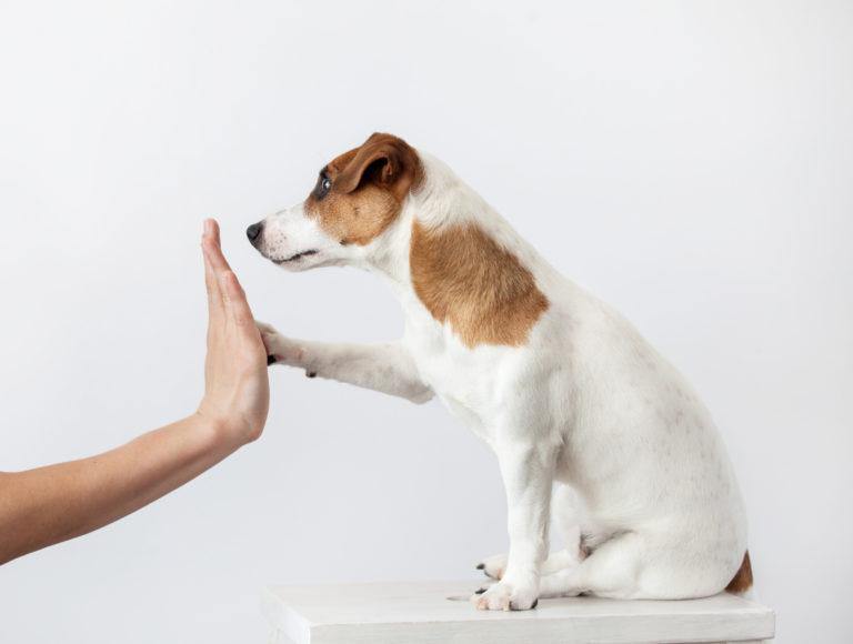 Pies przybija łapkę z człowiekiem