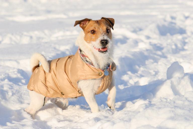 Płaszczyk dla psa