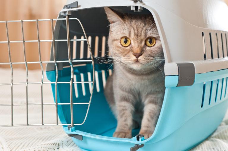 Transporter dla kota w podróży