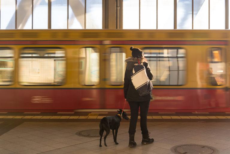 Transport psa pociągiem