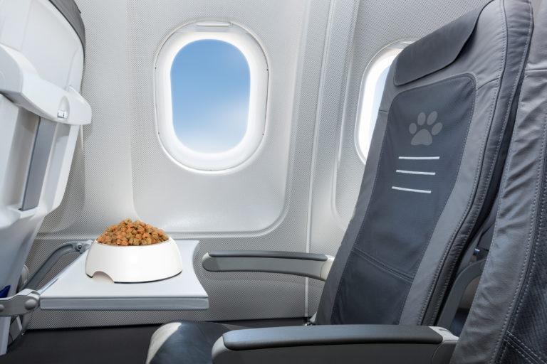 Lot samolotem z psem