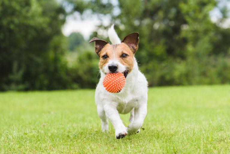 Sport i zabawa psa