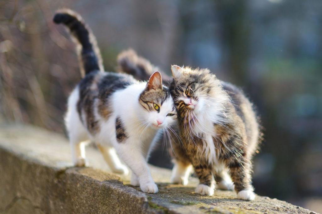 dwa szczęśliwe koty