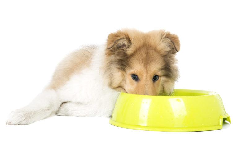Karma dla wykastrowanego psa
