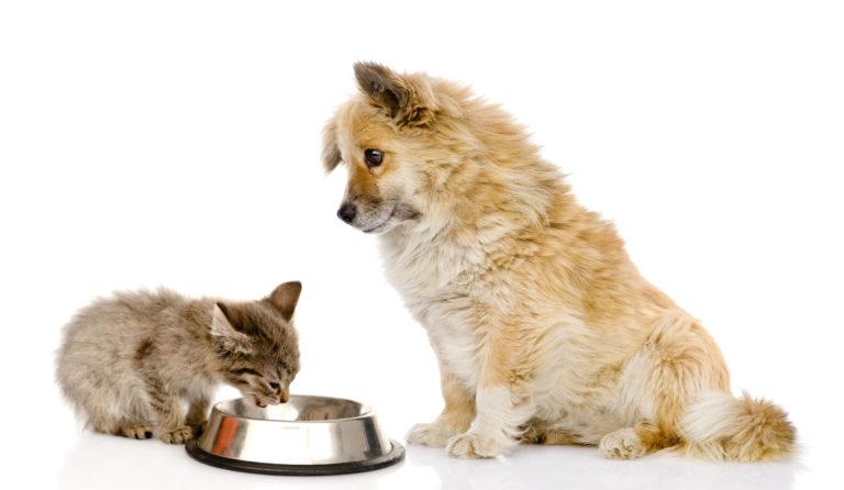 Dieta psa a dieta kota