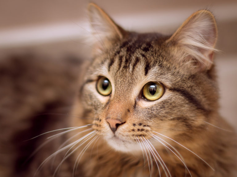 zrozumieć mowę kota