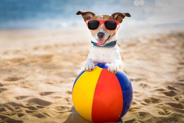 Akcesoria dla psa na lato