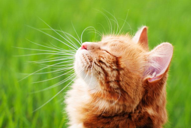 Topowe artykuły dla kota na lato