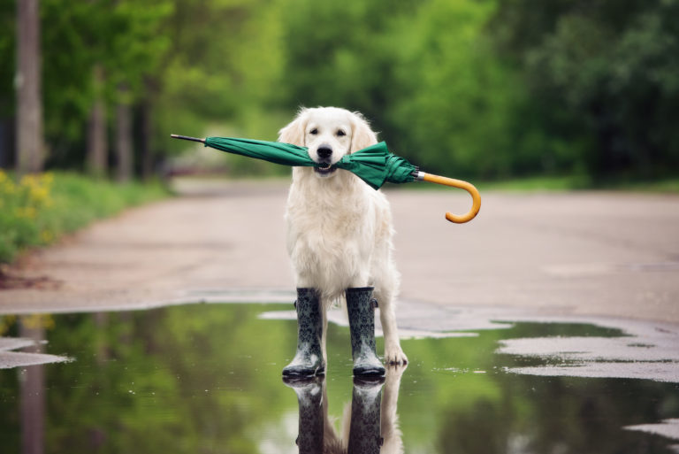 ochrona łapek psa