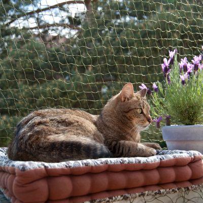 ochronna siatka dla kota