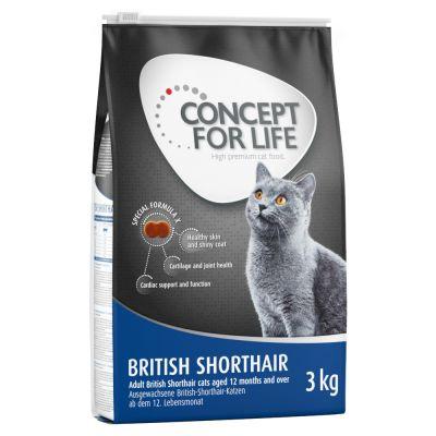 karma dla kota brytyjskiego krótkowłosego