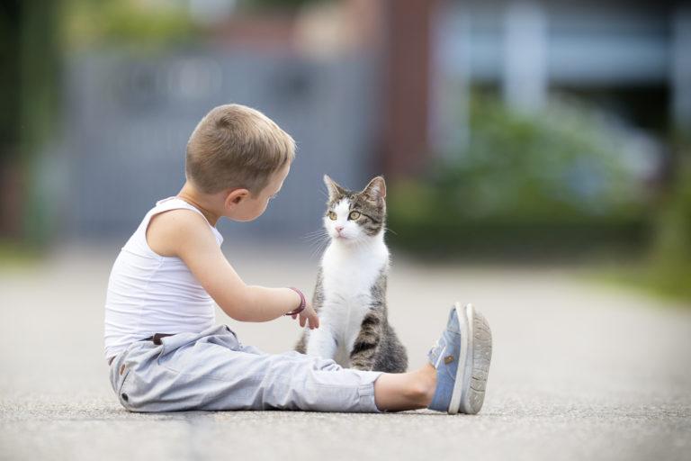 Kot terapeutyczny