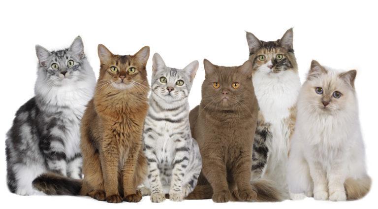 Specjalne karmy dla kocich ras