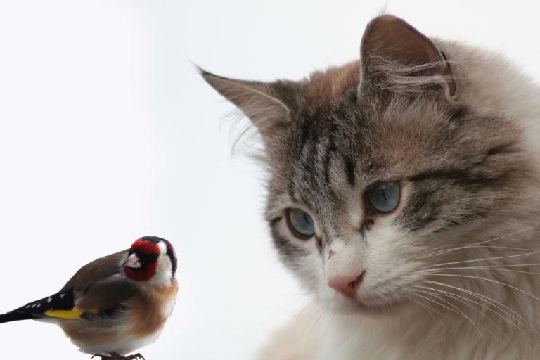 Dom z kotem i ptakiem