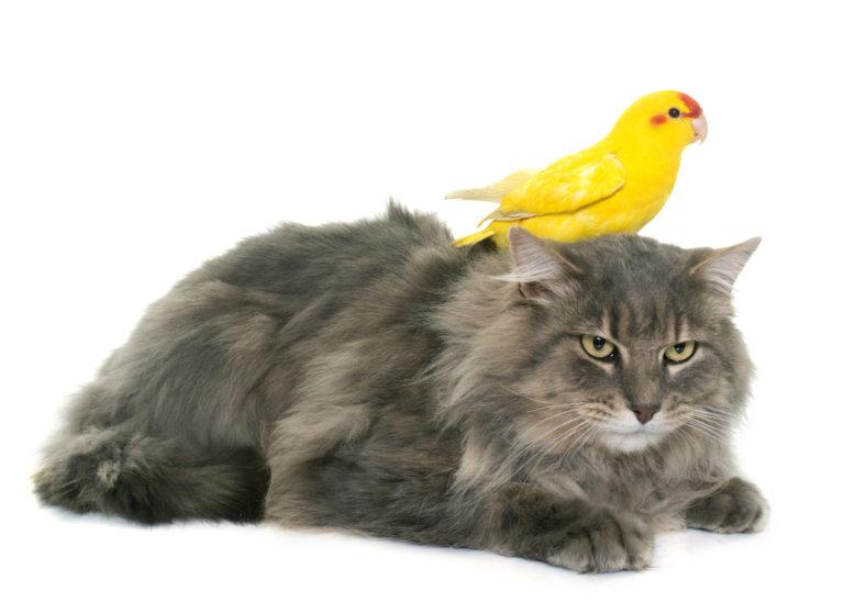 Wspólne życie ptaka i kota