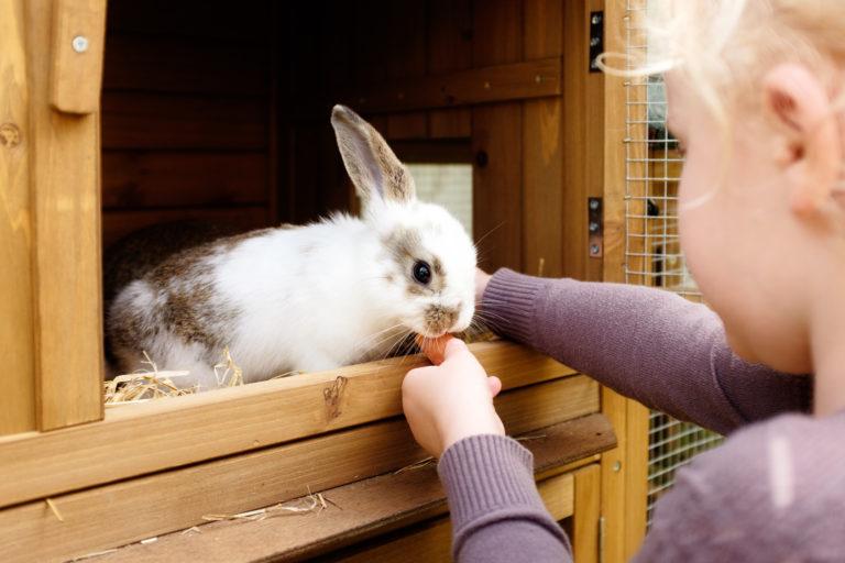 karma dla królika domowego