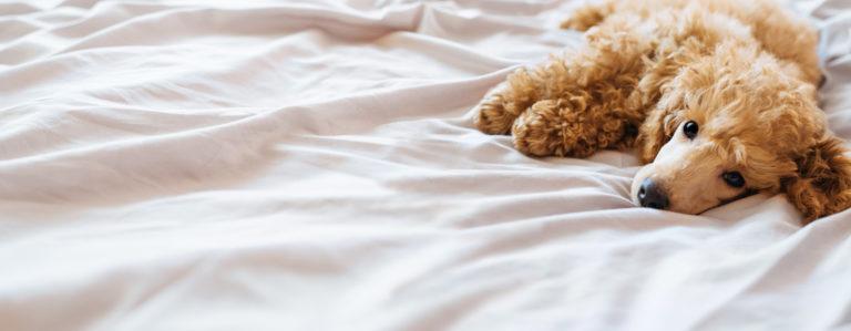 Łóżko dla psa