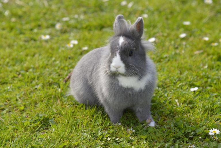 króliki jako pupile