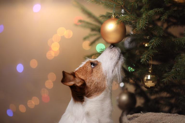 pies w święta