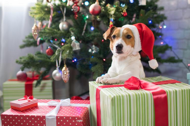 pies bezpieczny w święta