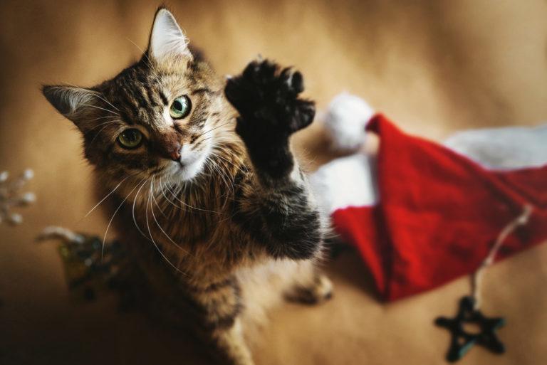 bezpieczne święta z kotem
