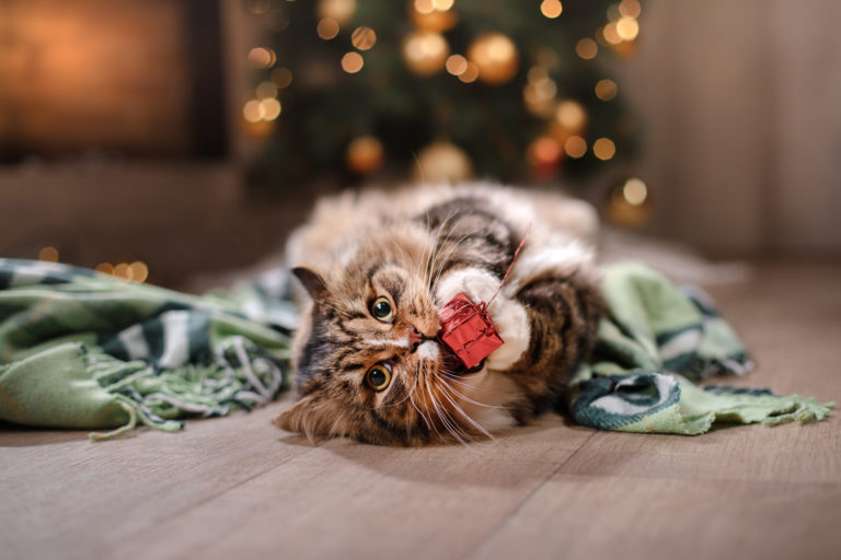 prezent dla kota