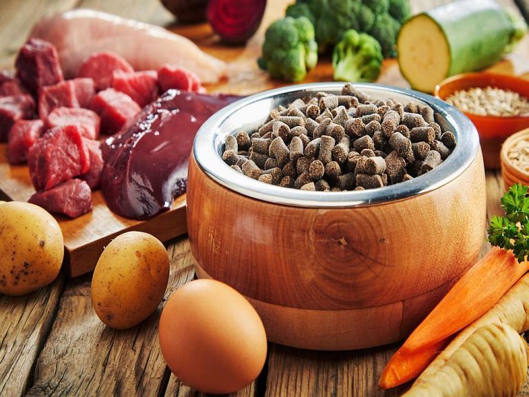 superfoods dla psa