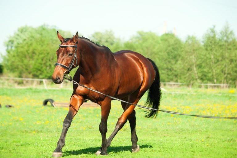 jak wychować konia