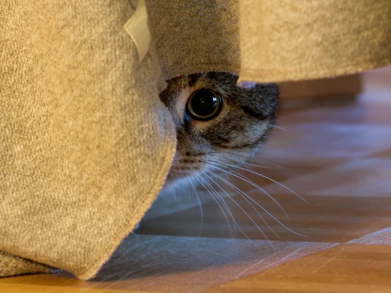 stany lękowe u kota