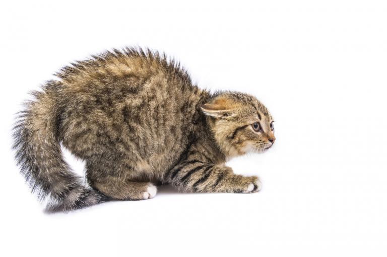 kot, który się boi