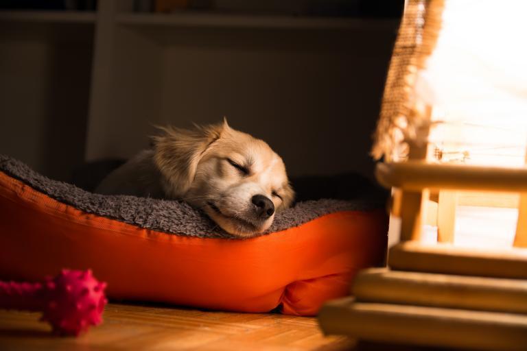 niespokojny sen u psa